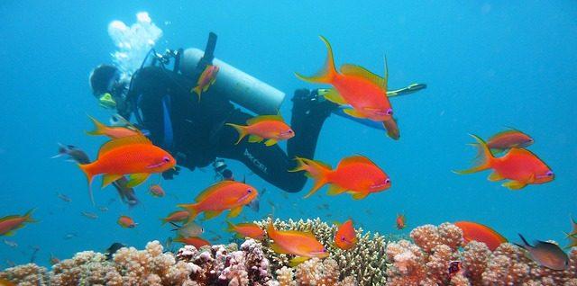 Tauchfans sollen im Aldiana Punta Cana voll auf Ihre Kosten kommen.